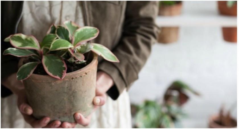 Las plantas de interiores también sienten. Estos son los 3 grandes secretos para cuidarlas