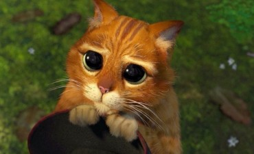 El gato con botas de la vida real existe, vive en Moscú y se llama Hosico