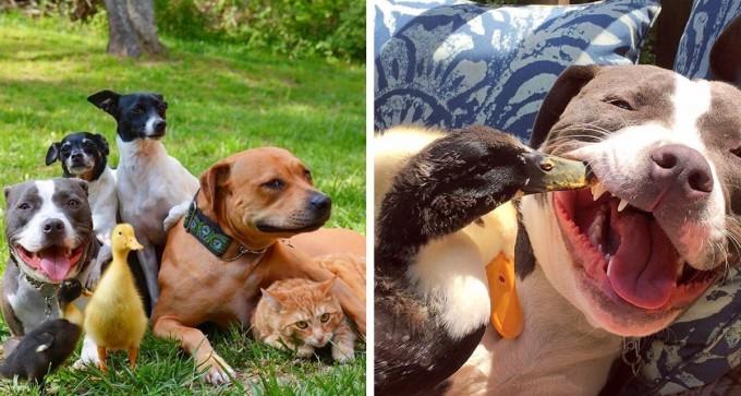 Ellos rescataron a siete adorables animales y así es como viven su vida ahora