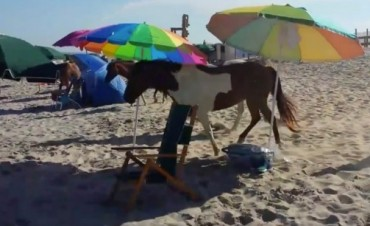 El ataque de los ponis salvajes es lo más extraño y gracioso que verás hoy