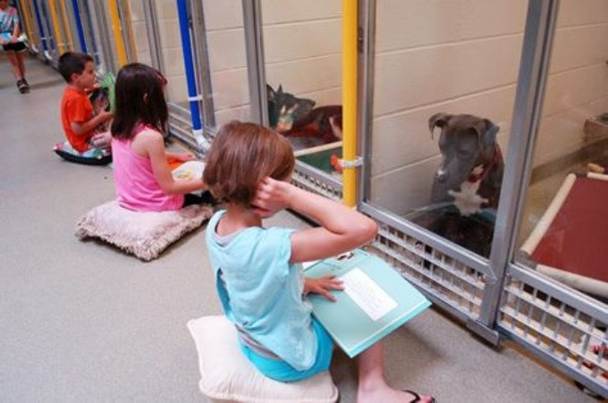 Excelente idea para sociabilizar a los perros abandonados