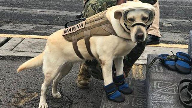 Reciben donaciones por tatuaje de Frida, la perra rescatista de México