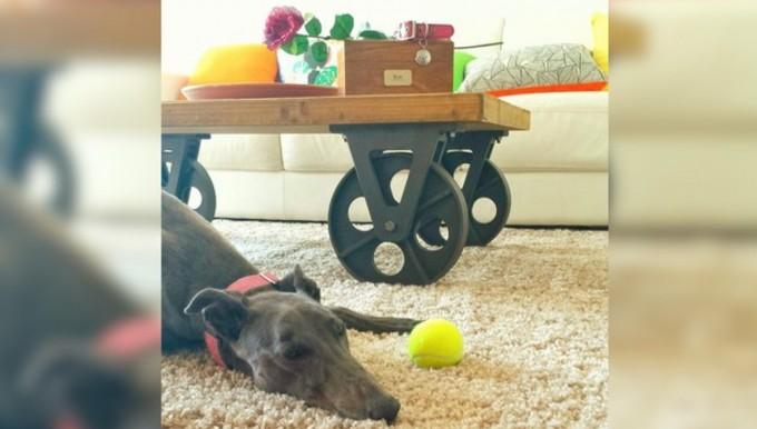 La mejor amiga de esta perra murió de cáncer y ella no puede aceptar que realmente se haya ido